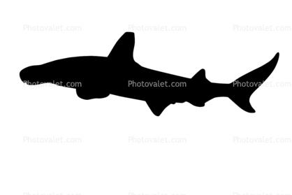 hammerhead shark silhouette elasmobranchii sphyrnidae elasmobranchii carcharhiniformes sphyrnidae