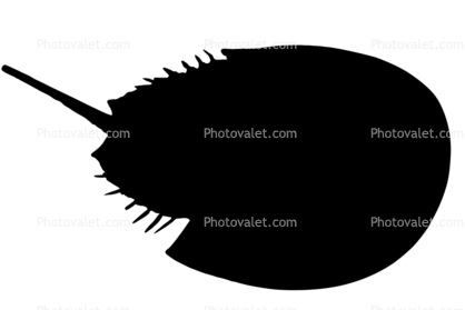 Silhouette of a Horseshoe Crab, logo, shape
