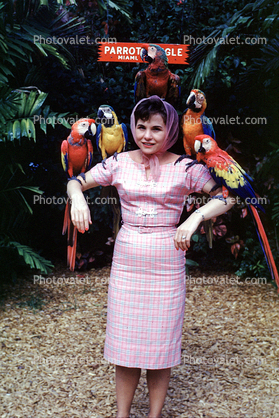 Woman in Pink Dress, Parrots
