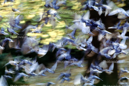 Pigeons, Central Park, New York City