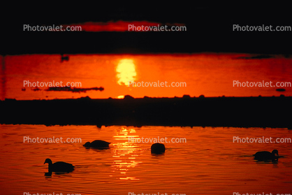 Sunset, Sunclipse, lagoon