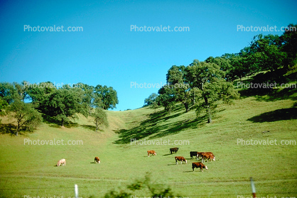 Pleasanton, Hills, Hillside