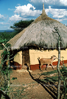 Building, unique, home, house, grass roof, goat, Sheikh Hussein, Ehtiopia