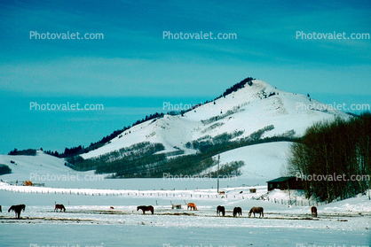 Horses, hills, fence, snow, mountains