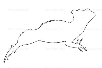 basilisk lizard outline line drawing basiliscus plumifrons iguania corytophanidae