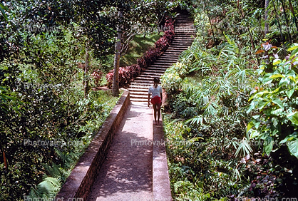 boy walking, steps, stairs, jungle