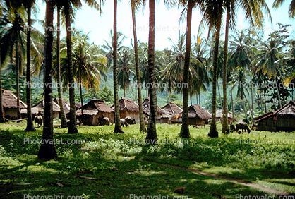 Homes, houses, buildings, palm trees, thatched roof, grass roof, Lombok Island