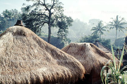 grass thatched huts, homes, houses, roofs, building