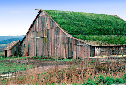 Barn Building, rural, sod roof, grass