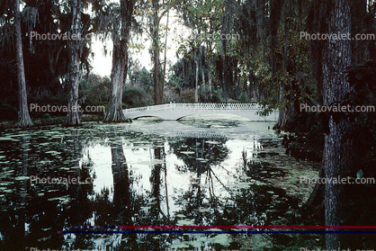 Footbridge, reflection, swamp, Magnolia Plantation, Charleston, Thomas Drayton, wetlands