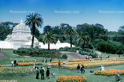 Conservatory Of Flowers, gardens, May 1963, 1960's