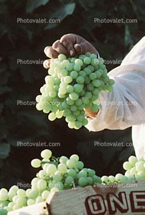 white grape, White , Grape Cluster