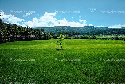 This is a picture of a grassy field
