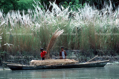 Boat, Reeds, workers