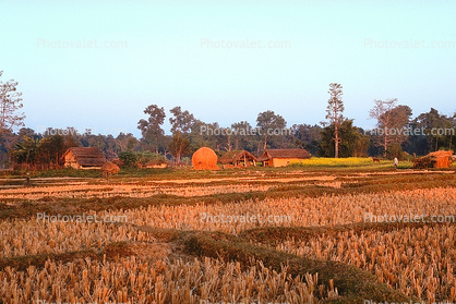 Rice Fields, houses, buildings, Bardiya, Nepal