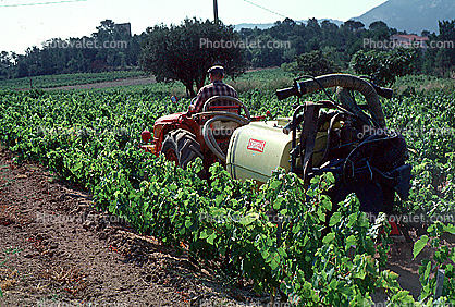 Tractor, trailer, grape vine, Herbicide, Insecticide, Pesticide