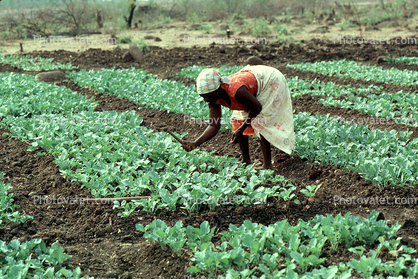 Woman Tending the Plants, Madzongwe, Zimbabwe