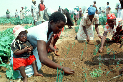 Women Planting a new crop
