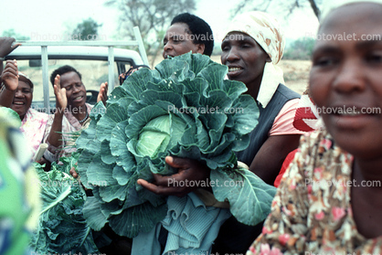 Women with Cabbage Harvest