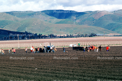 Dirt, soil, fields, migrant workers