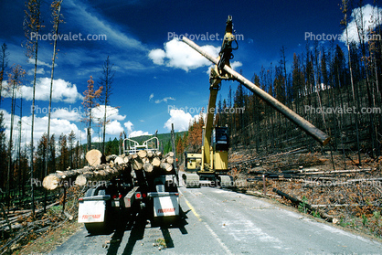 Logging Truck, Crane, clearing out burned trees from the great fire