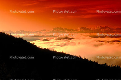 fog in the distance, the hillside of Mount Fuji, Fog, Clouds
