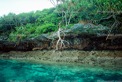 Tropical Island, Coral Reef