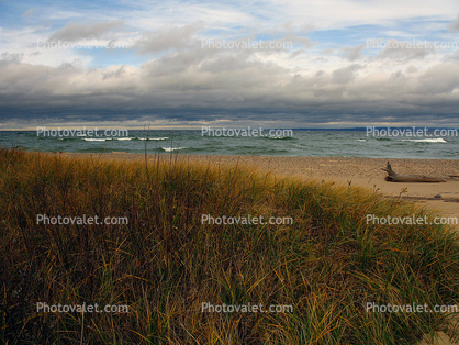 Beach, waves, Lake, Driftwood, sand, grass, water
