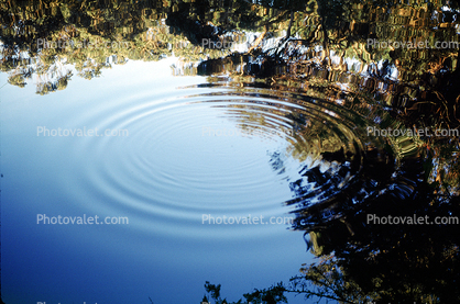 Pond, lake, Wavelets, Concentric Ripples, Wave Propagation, Round, Circular, Circle, Wet, Liquid, Water