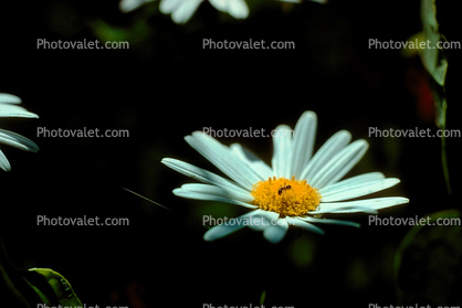 flower holding an ant