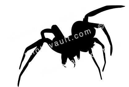 Wolf Spider Silhouette, Lycosidae, logo, shape