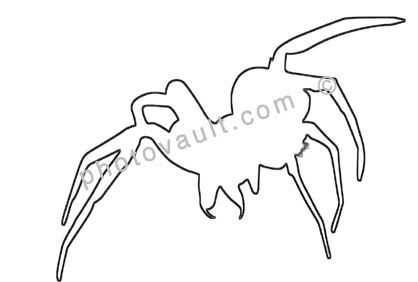 Wolf Spider line drawing, Lycosidae, Outline, shape