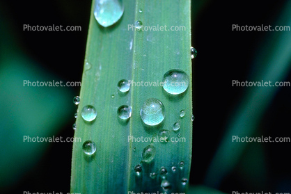 Early Morning Dew, Blades of Grass, Waterlens