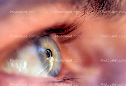 Eyeball, Iris, Lens, Pupil, Eyelash, Cornea, Sclera, Male, Man, profile