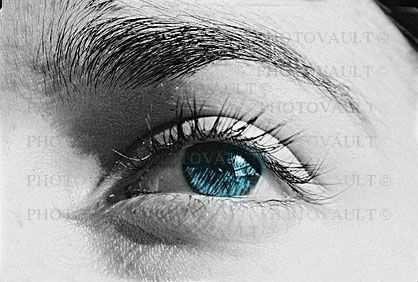 Eyeball, Iris, Lens, Pupil, Eyelash, Cornea, Sclera, Female, Woman, Eye Brow, Eyebrow, skin