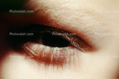 Eyeball, Eyelash, skin, Woman, Female