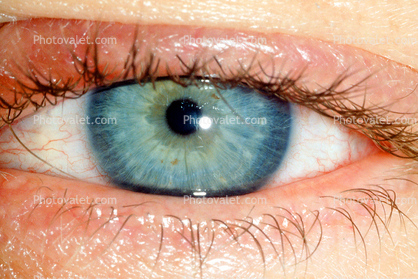 Eyeball, Iris, Lens, Pupil, Cornea, Sclera, Eyelash, aqueous humor, skin, Woman, Female