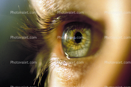 late afternoon sun lighting, aqueous humor, Man, Male, Eyeball, Iris, Lens, Pupil, Cornea, Sclera, Eyelash