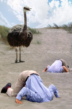 Ostrich, Head Buried in the Sand, Bury Your Head In the Sand, Businessman, Businesswoman