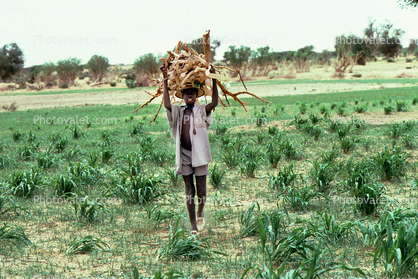 Man carrying Tree Branches, firewood, desertification, Africa