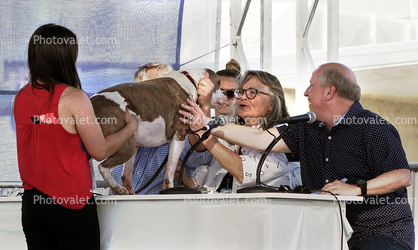 Judges, Judging Table, World's Ugliest Dog Contest, Sonoma-Marin Fair, 21/06/2019