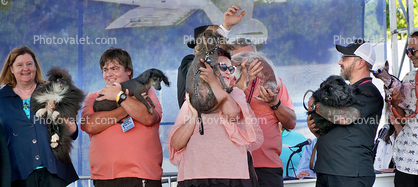 Lineup of Dogs, World's Ugliest Dog Contest, Sonoma-Marin Fair, 21/06/2019