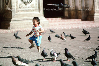 pigeons, girl, marching