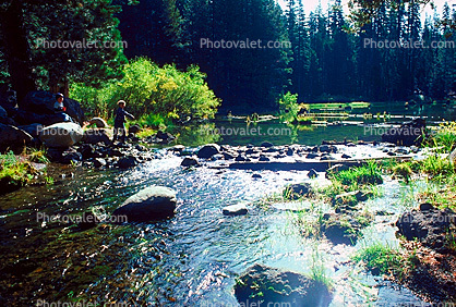 Fishing, Stream, Lake, Forest