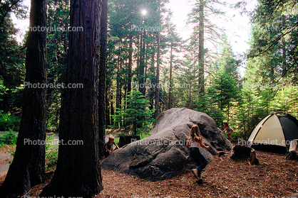 Tent, Boulder, Trees, Forest, Running Girl