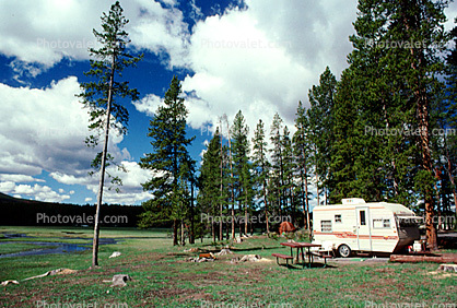 Trailer, Forest, Campsite, Evergreen Trees