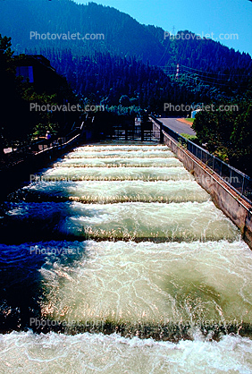 fish ladder, Bonneville, bypass