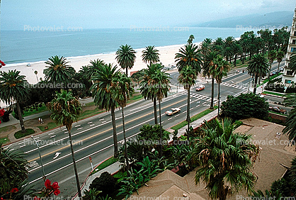 Ocean Blvd., Palm Trees, Beach, Pacific Ocean, Pacific Palisades, Santa Monica Bay