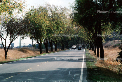 Highway, Roadway, Tree lined road