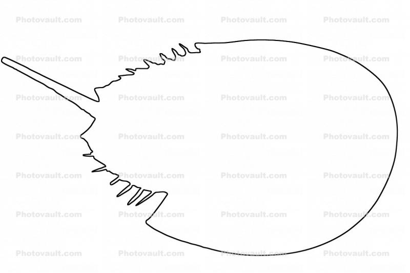 outline of a Horseshoe Crab, line drawing, shape